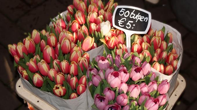 tulip price